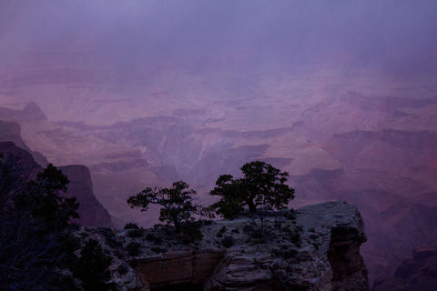 Yaki Point Purple Haze
